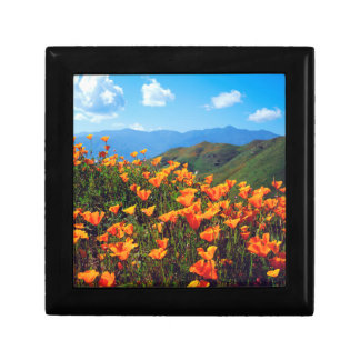 California poppies covering a hillside small square gift box