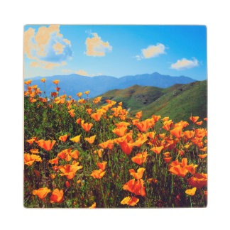 California poppies covering a hillside wood coaster