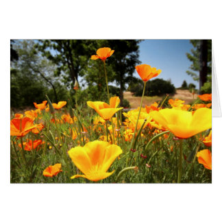 California Poppies Greeting Cards