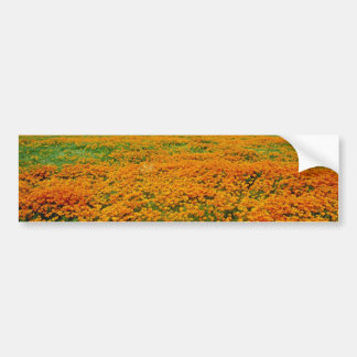 California poppies in full bloom flowers bumper stickers