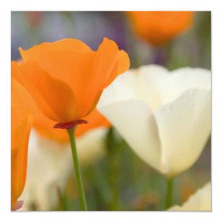 California Poppies 5.25x5.25 Square Paper Invitation Card