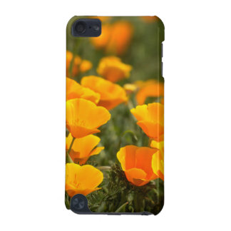 California poppies, Montana de Oro State Park iPod Touch 5G Cases