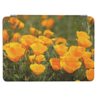 California poppies, Montana de Oro State Park iPad Air Cover
