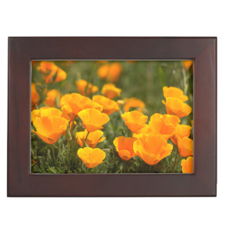 California poppies, Montana de Oro State Park Keepsake Box