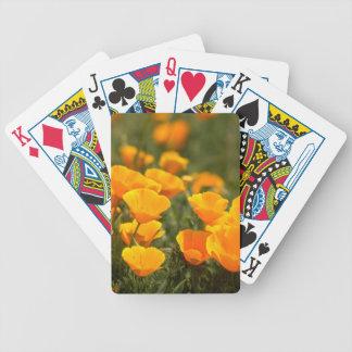 California poppies, Montana de Oro State Park Poker Deck