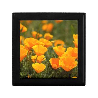 California poppies, Montana de Oro State Park Small Square Gift Box