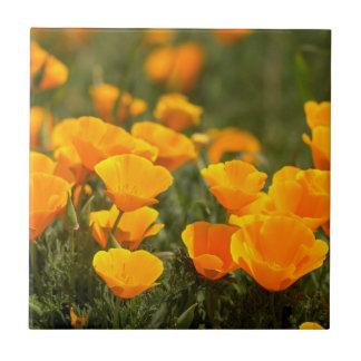 California poppies, Montana de Oro State Park Small Square Tile