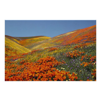 California Poppies Poster FROM 8.99