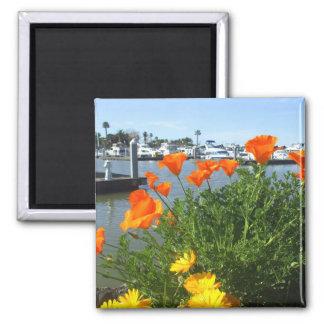 California poppies square magnet