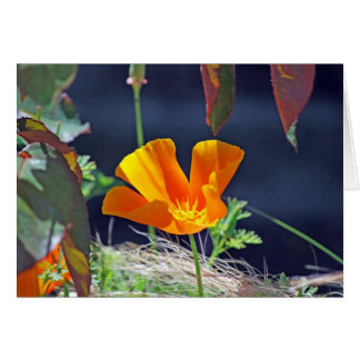 California Poppy Card