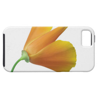 California poppy case for the iPhone 5