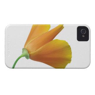 California poppy Case-Mate iPhone 4 case