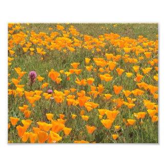 California Poppy Field Photo Print