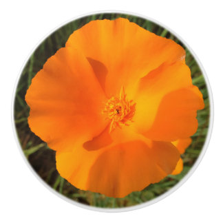 California Poppy Flower Ceramic Knob