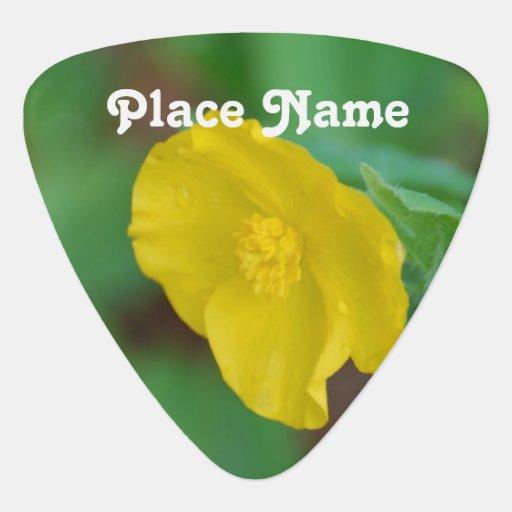 California Poppy Pick