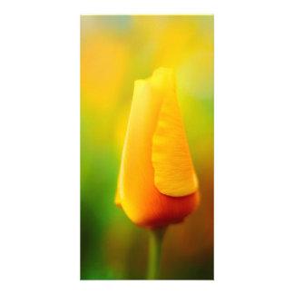 California Poppy Photo Cards