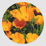 """California Poppy"" Round Sticker"