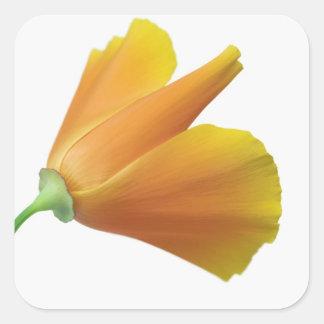 California poppy square sticker