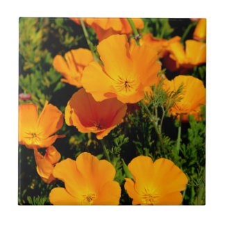 """California Poppy"" Tile"