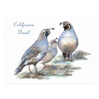 California Quail , Bird, Nature, Wildlife Postcard
