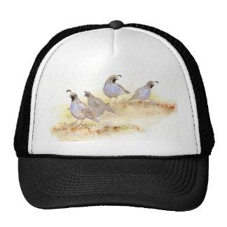 California Quail, Birds, Nature, Wildlife, Cap