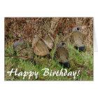 California Quail Birthday Card