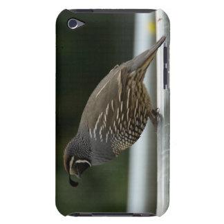 California Quail Case-Mate iPod Touch Case