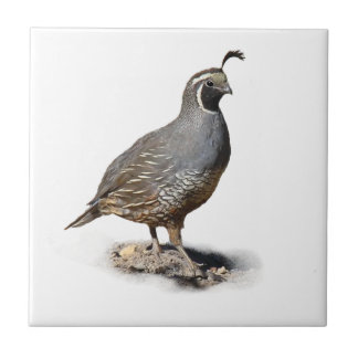 CALIFORNIA QUAIL TILE