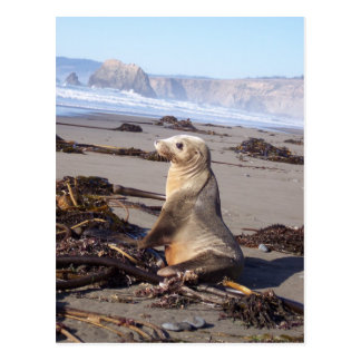 California Red Seal Post Card