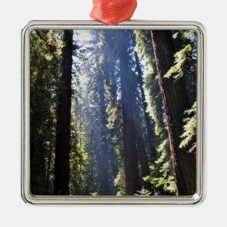 California Redwoods Silver-Colored Square Decoration