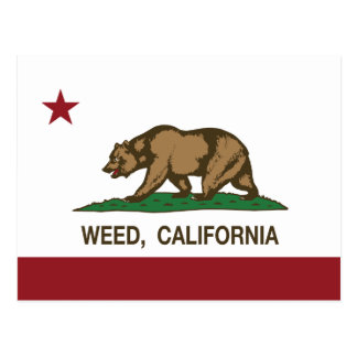 California Republic Flag Weed Postcard