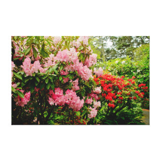 California Rhododendron Stretched Canvas Prints