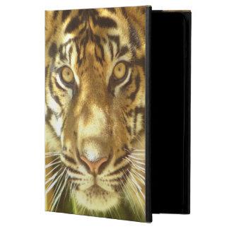 California, San Francisco Zoo, Sumatran Tiger Case For iPad Air