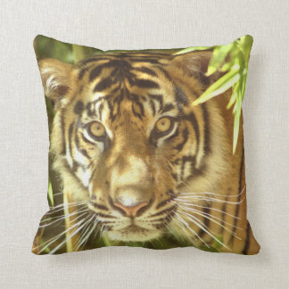 California, San Francisco Zoo, Sumatran Tiger Cushion