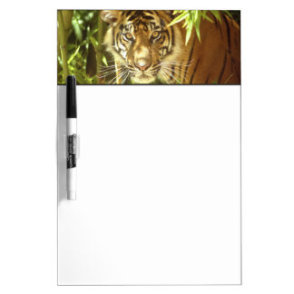 California, San Francisco Zoo, Sumatran Tiger Dry Erase Board