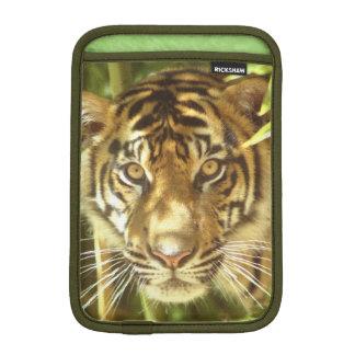 California, San Francisco Zoo, Sumatran Tiger iPad Mini Sleeves