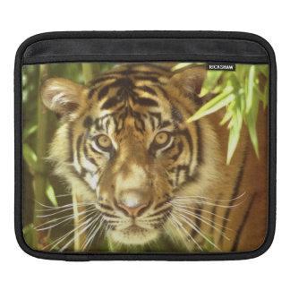 California, San Francisco Zoo, Sumatran Tiger iPad Sleeve