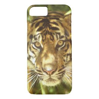 California, San Francisco Zoo, Sumatran Tiger iPhone 7 Case