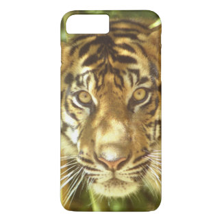 California, San Francisco Zoo, Sumatran Tiger iPhone 8 Plus/7 Plus Case