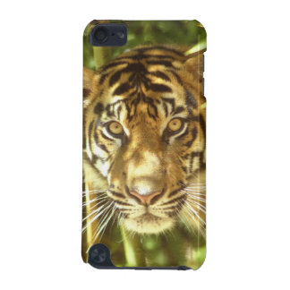California, San Francisco Zoo, Sumatran Tiger iPod Touch (5th Generation) Case
