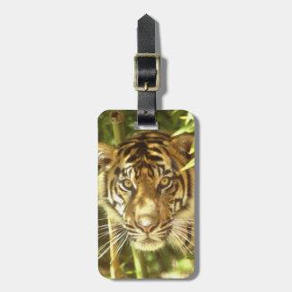 California, San Francisco Zoo, Sumatran Tiger Luggage Tag