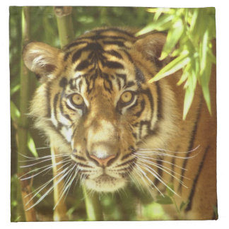 California, San Francisco Zoo, Sumatran Tiger Napkin