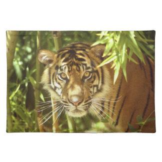California, San Francisco Zoo, Sumatran Tiger Placemat