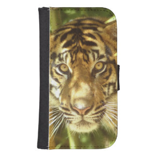 California, San Francisco Zoo, Sumatran Tiger Samsung S4 Wallet Case