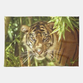 California, San Francisco Zoo, Sumatran Tiger Tea Towel