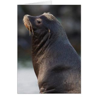 California Sea Lion 2 Card