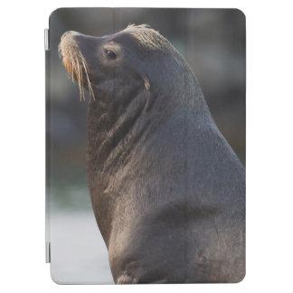 California Sea Lion 2 iPad Air Cover