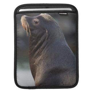 California Sea Lion 2 iPad Sleeve