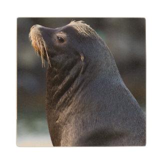 California Sea Lion 2 Wood Coaster