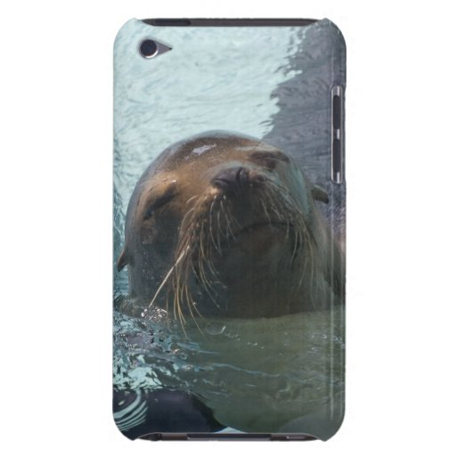 California Sea Lion Barely There iPod Cases